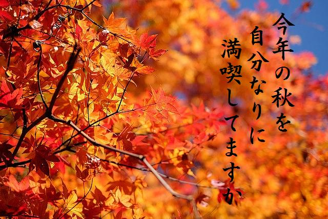 今年の秋を自分なりに満喫してますか
