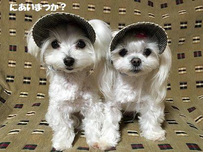 帽子りぼん服 (1)