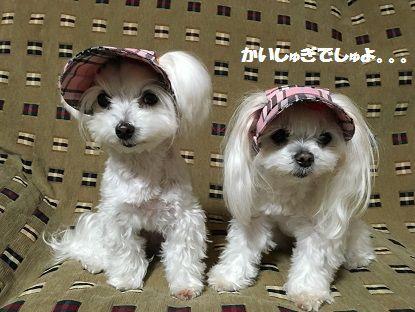 帽子りぼん服 (3)
