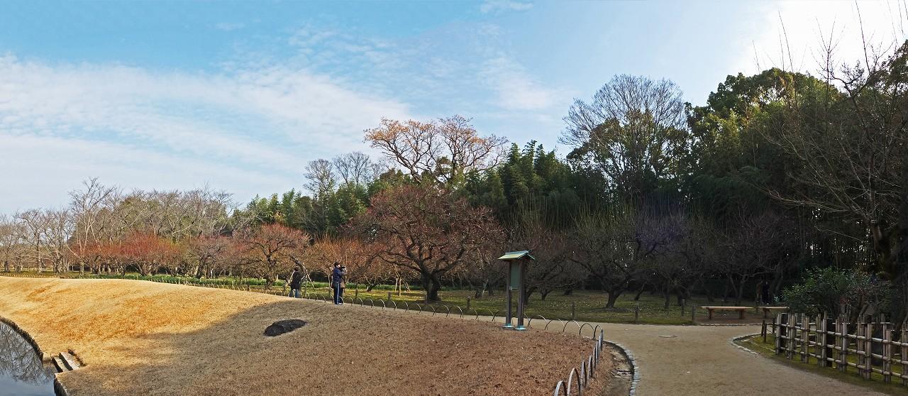 s-20160111 後楽園今日の梅林剪定前のワイド風景 (1)