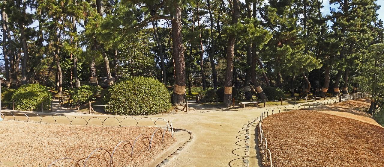 s-20160222 後楽園菰焼間近の今日の園内松林ワイド風景 (1)