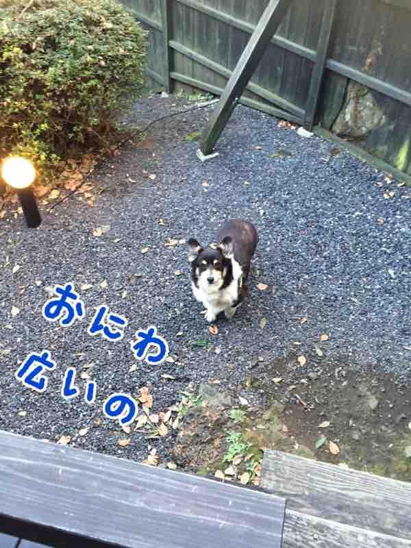fc2blog_20160210154046d4c.jpg
