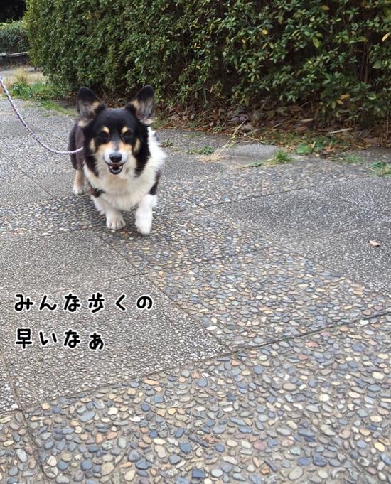 fc2blog_2016021112041973b.jpg