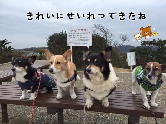 fc2blog_201602111204547b4.jpg