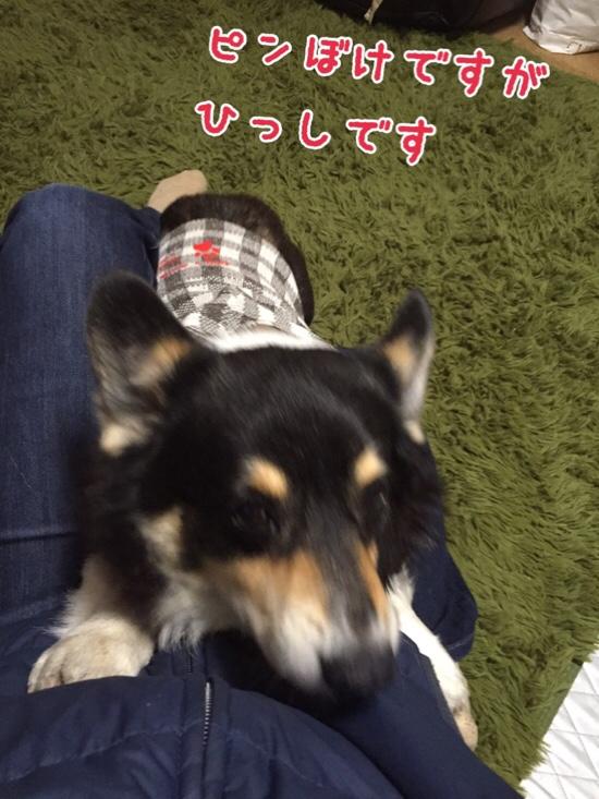 fc2blog_201603050814573c2.jpg