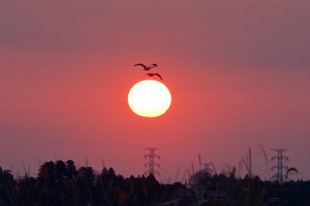 白鳥と朝陽