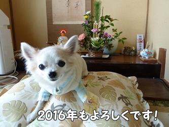 ブログ用001-2016 01 01-112219