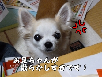 ブログ用002-2016 01 01-182102