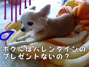 ブログ用010-2016 02 09-144712