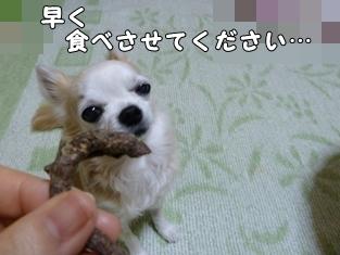 ブログ用018-2016 01 29-125331