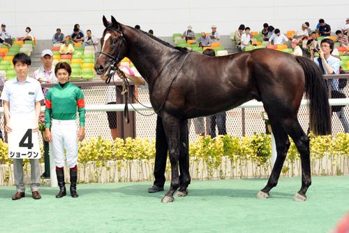 【競馬ネタ】自分が戦に出陣する時に乗っていきたい馬