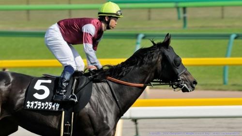 【競馬】ネオブラックダイヤ、ドバイへ
