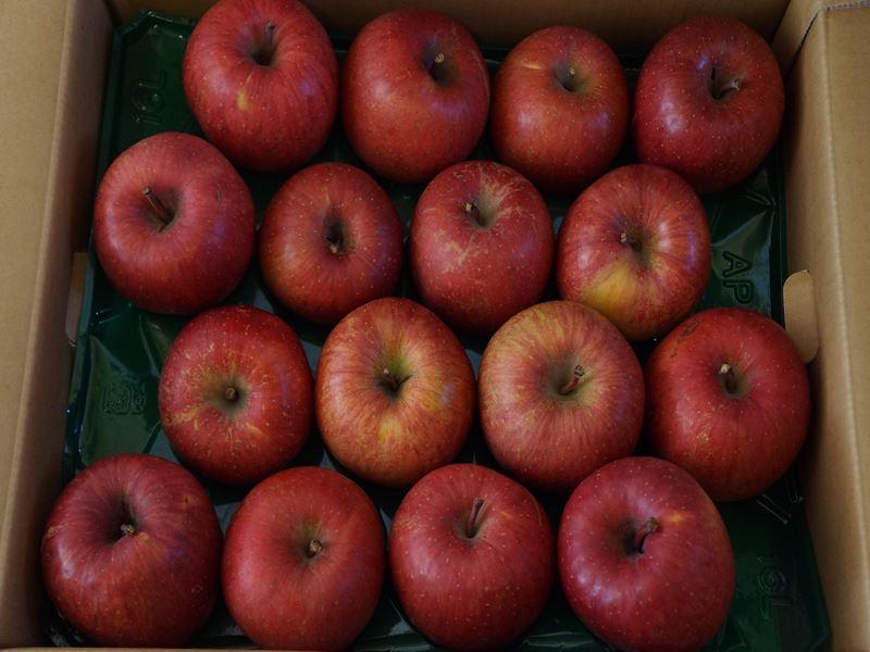青森よりリンゴ
