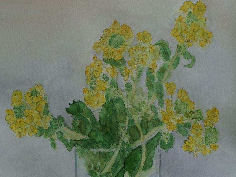 菜の花の水彩画