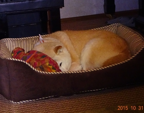 3DSC03392寝る支度3
