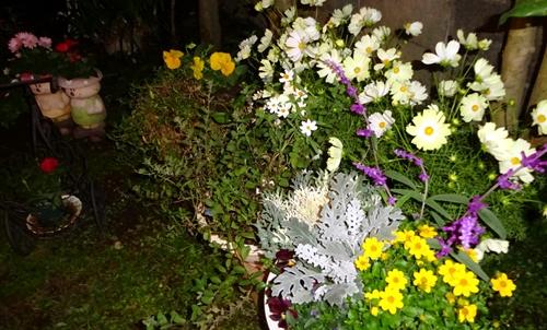 DSC03526秋の庭の花