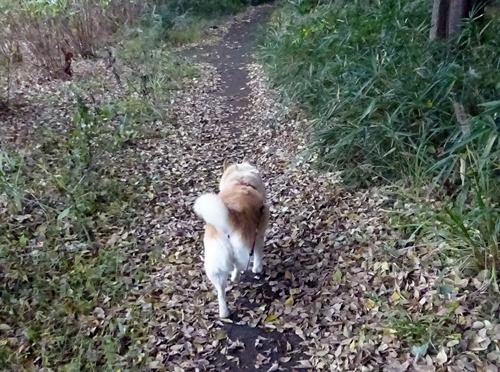 DSC03652落ち葉の上を歩くカノン
