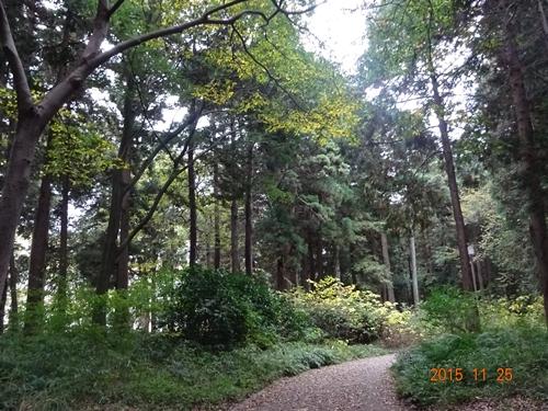 DSC03646晩秋の森