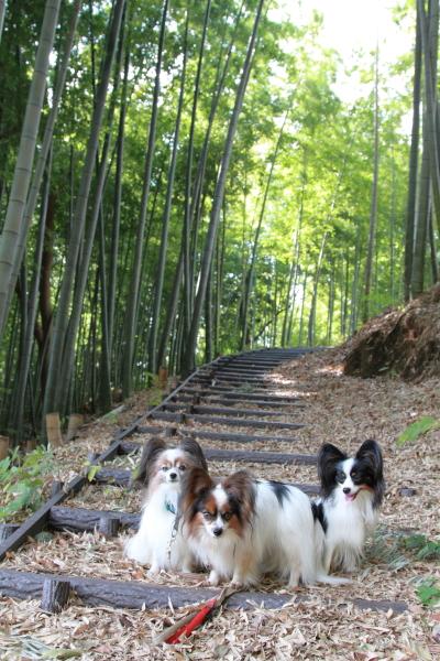 IMG_3392草の種公園散歩