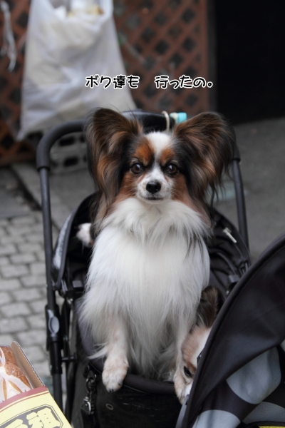 IMG_3483川越川越