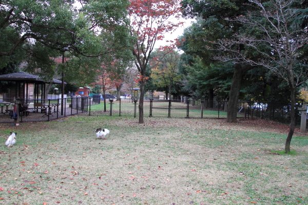 IMG_3871昭和記念公園 銀杏昭和記念公園 銀杏昭和記念公園 銀杏