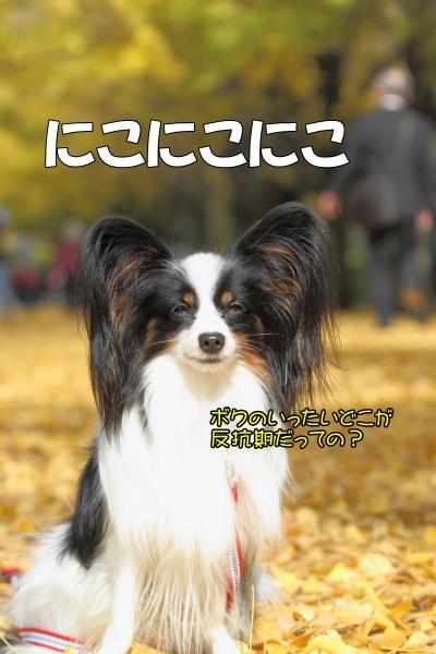IMG_9751サブ蓮テイサブ蓮テイ