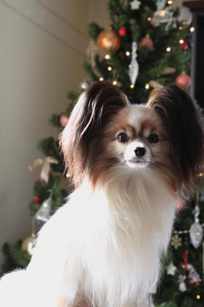 IMG_9914クリスマスツリークリスマスツリー