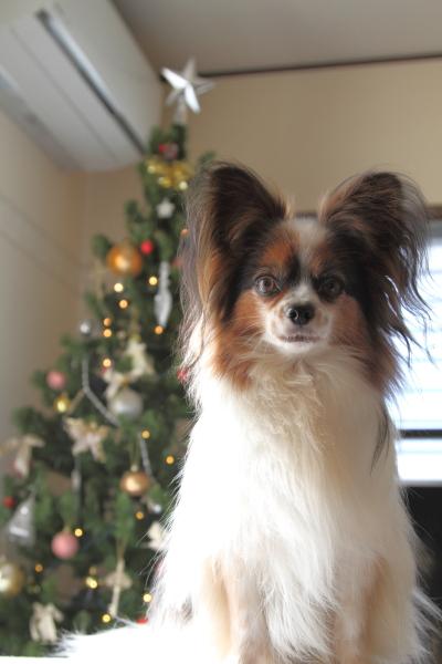 IMG_9945クリスマスツリークリスマスツリー