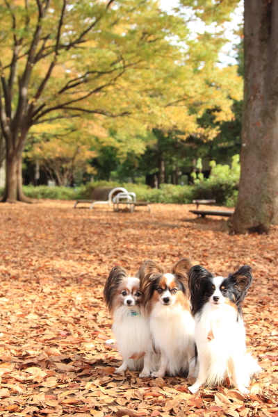 IMG_6704駒沢公園駒沢公園