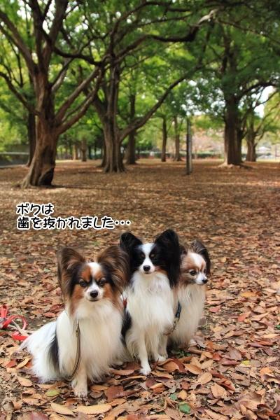 IMG_6709駒沢公園駒沢公園