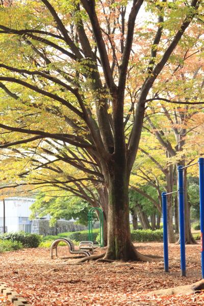 IMG_6701駒沢公園駒沢公園