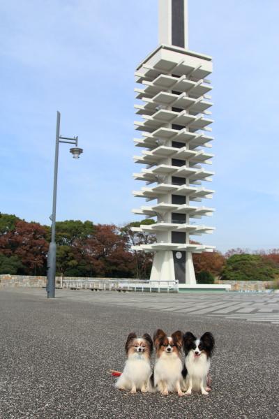 IMG_6713駒沢公園駒沢公園