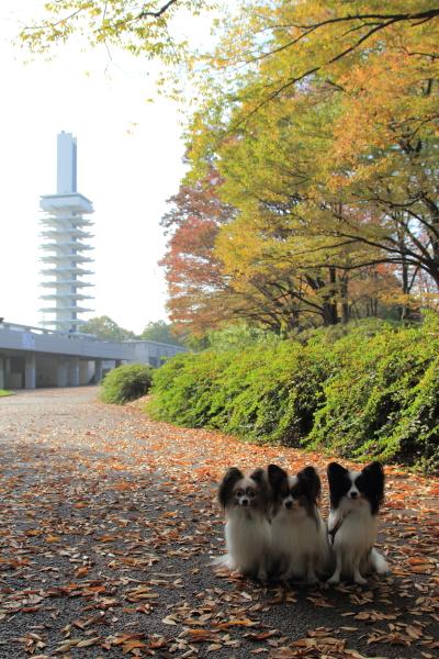 IMG_6724駒沢公園駒沢公園