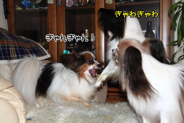 IMG_0207朝朝