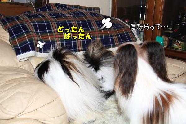 IMG_0202朝朝