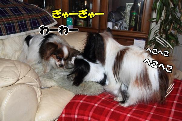 IMG_0194朝朝
