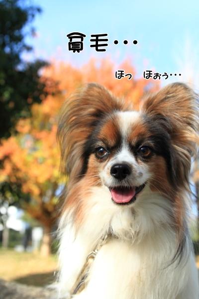 IMG_0506馬入公園馬入公園