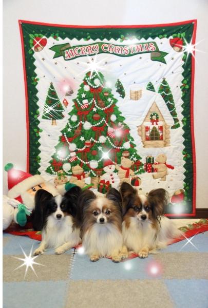 IMG_6961クリスマス 姫クリスマス姫