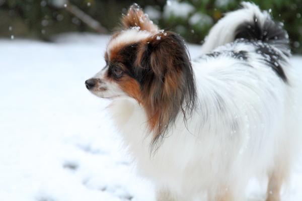 2月初雪カレンダー