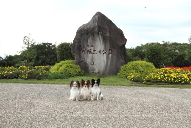IMG_1709三川公園三川公園