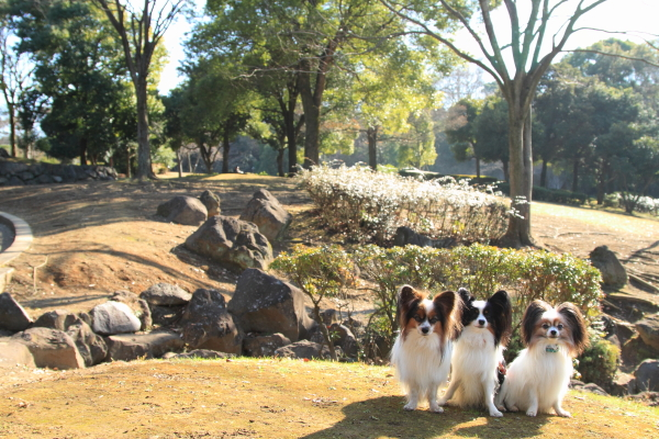 IMG_1478新春ふるさと公園