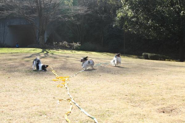 IMG_1394新春ふるさと公園