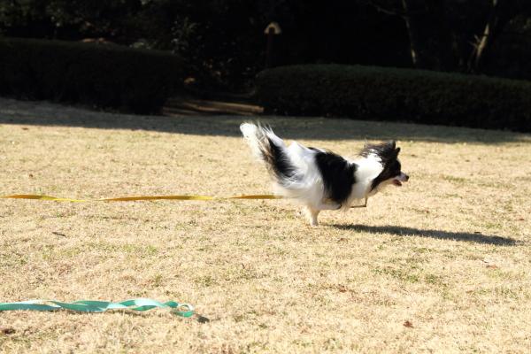 IMG_1430新春ふるさと公園