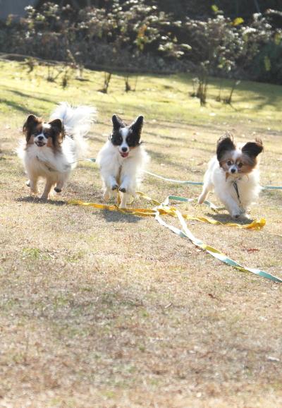 IMG_1460新春ふるさと公園