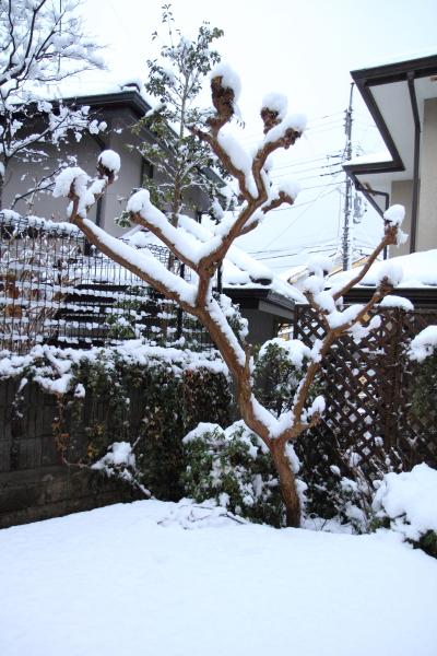 IMG_2654初雪2016初雪2016