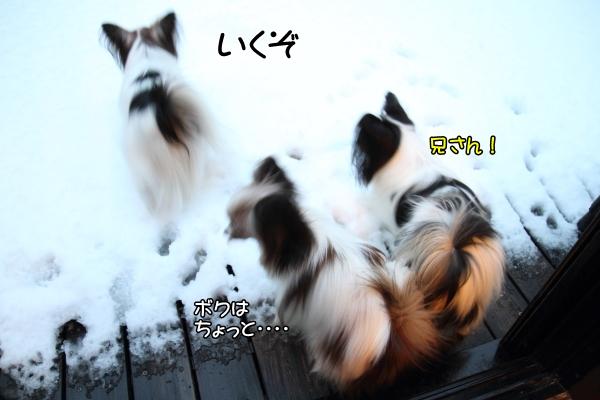 IMG_2655初雪2016初雪2016
