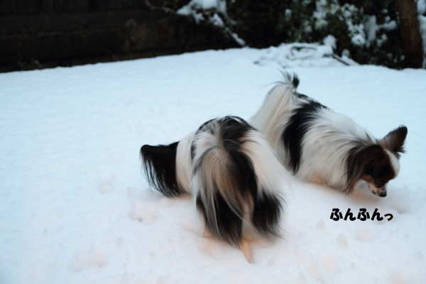 IMG_2657初雪2016初雪2016