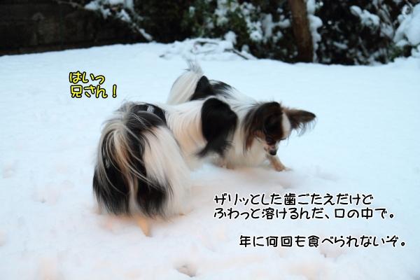 IMG_2660初雪2016初雪2016