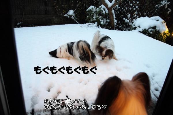 IMG_2661初雪2016初雪2016