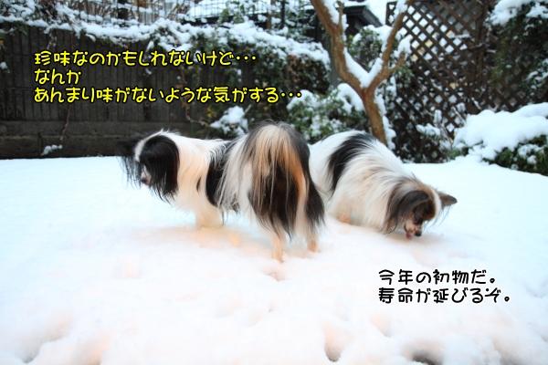 IMG_2662初雪2016初雪2016